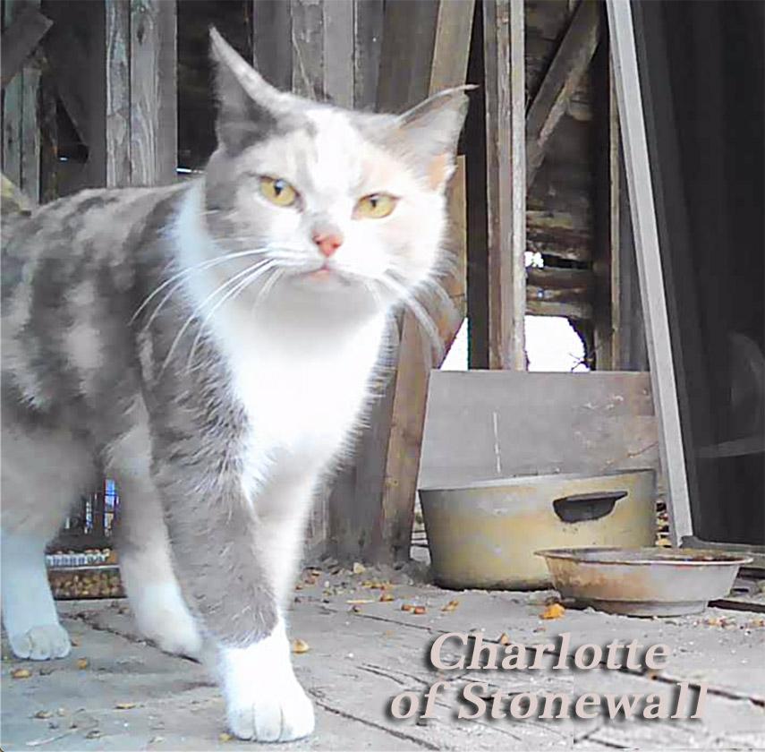 Charlotte of Stonewall