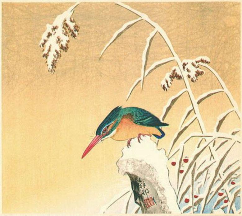 Koson's Kingfisher