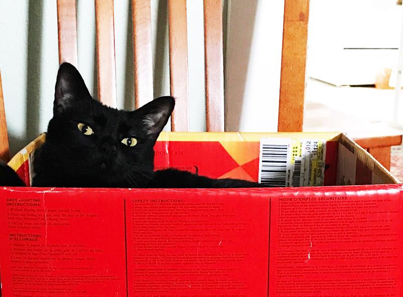 Monkey in a Box