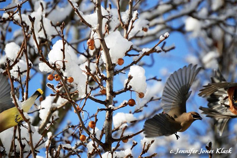 Snowbirds by Jennifer Jones Klask